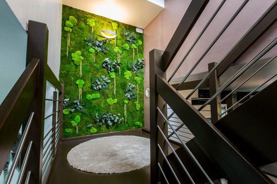 Green Walls Sparse Forest di Greenmood