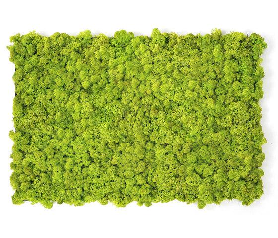 MOSSwall® by Verde Profilo
