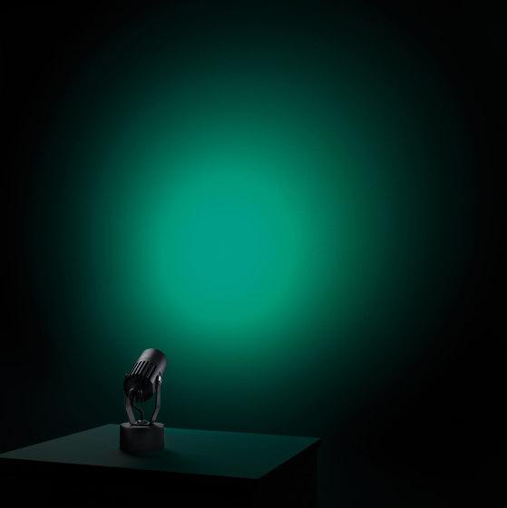 Flori de L&L Luce&Light