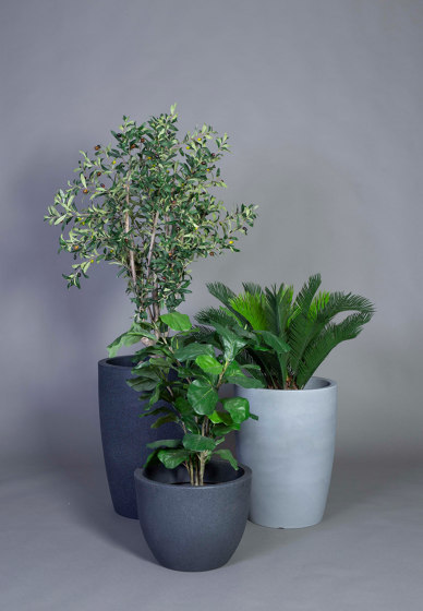 Fiddle leaf fig tree small by Götessons