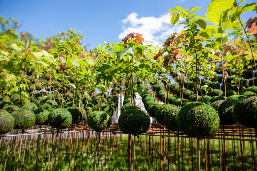 Kokedama Forest by Nomad Studio   Gardens