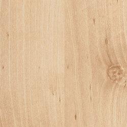 Masuren Birch Sand | Wood panels | Pfleiderer