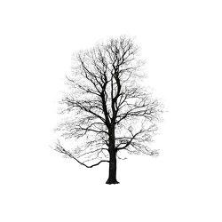Tree Winter | Quadri / Murales | Magis