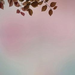 Amour | Revestimientos de paredes / papeles pintados | GLAMORA