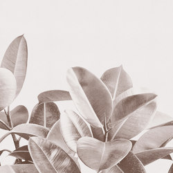 Rubber Plant | Wall coverings / wallpapers | LONDONART