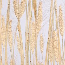 Invision corn | Synthetic panels | DesignPanel