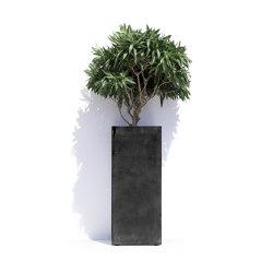 Barcelona | Plant pots | Cosapots