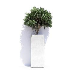 Barcelona   Plant pots   Cosapots