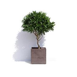 Geneva | Plant pots | Cosapots