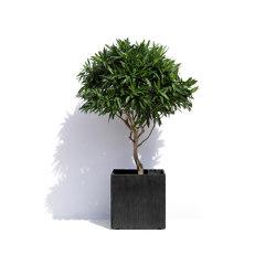 Geneva S | Plant pots | Cosapots