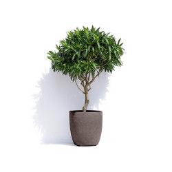 Helsinki | Plant pots | Cosapots