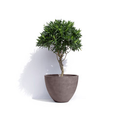 London | Plant pots | Cosapots
