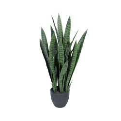 Sansiveria incl. black pot | Artificial plants | Götessons