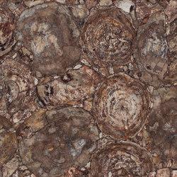 Petrified Wood | Lastre minerale composito | Caesarstone