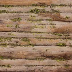Baobab Moss | Pannelli composto | Artstone
