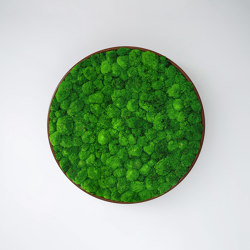 G-Circle | Pareti vegetali | Greenmood