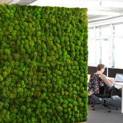 Green Walls Provence Moss | Privacy screen | Greenmood