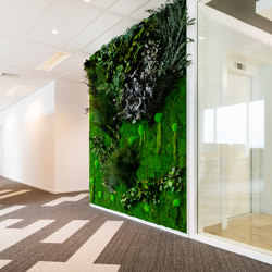Green Walls Sparse Forest | Living / Green walls | Greenmood