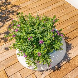 Sun Planter | Plant pots | Sit