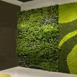 Vertical Gardens | Vertical Hortus | Living / Green walls | Verde Profilo