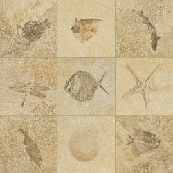 Petrae Bavaria Fossil R | Piastrelle ceramica | Refin