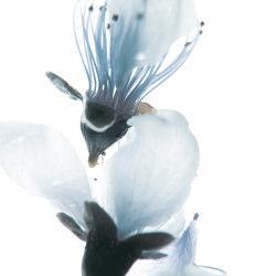 petals | cher | Arte | N.O.W. Edizioni