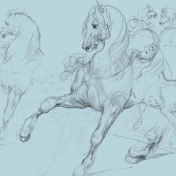 Horse Studies | Wall coverings / wallpapers | GMM