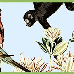 Monkey | Bordüren | GMM