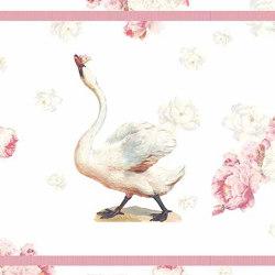 My Dear Swan | Orlas | GMM