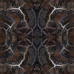 Extinct Animals   Blooming Seadragon   Rugs   moooi carpets