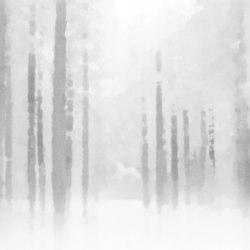 Waterwood White | Wall art / Murals | TECNOGRAFICA