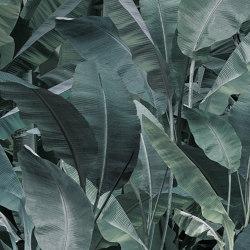 jungle | thai banano | Arte | N.O.W. Edizioni