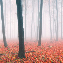 Ap Digital 3 | Wallpaper 471836 Fog In Forest | Wall coverings / wallpapers | Architects Paper