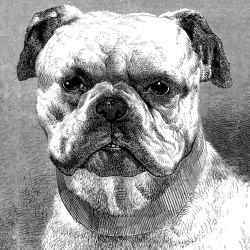 Ap Digital 4 | Wallpaper DD108930 Bulldog | Wall coverings / wallpapers | Architects Paper
