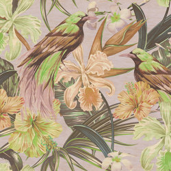 Walls By Patel 2   Papel Pintado DD114417 Exotic Birds 2   Revestimientos de paredes / papeles pintados   Architects Paper