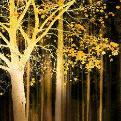 Ap Digital 4 | Papel Pintado DD109055 Artwork Tree | Revestimientos de paredes / papeles pintados | Architects Paper