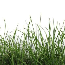 Ap Digital 4 | Carta da Parati DD109160 Green Grass | Carta parati / tappezzeria | Architects Paper
