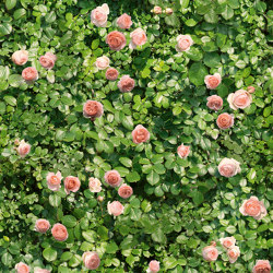 Limpha Coral Rose | Ceramic tiles | Casalgrande Padana
