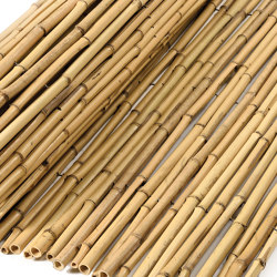 "Bamboos | Natural bamboo 12-16mm ""white quality"" 