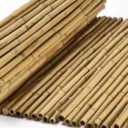 "Bamboos | Natural bamboo 16-22mm ""white quality"" 