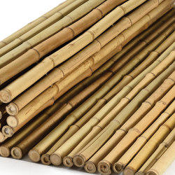 "Bamboos | Natural bamboo 24-28mm ""white quality"" 