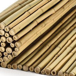 "Bamboos | Natural bamboo 30-35mm ""white quality"" 