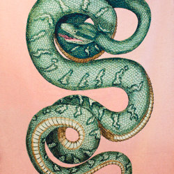 Bestia | Blanket Serpentes | Plaids | schoenstaub