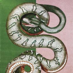 Bestia | Carpet Serpentes 1 | Formatteppiche | schoenstaub