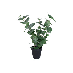 Eucalyptus in a pot small | Artificial plants | Götessons