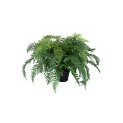 Fern | Artificial plants | Götessons