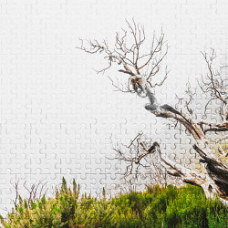 Atelier 47 | Wallpaper DD116890 Deathtree1 | Wall coverings / wallpapers | Architects Paper