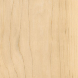 Signature Woods - 1,0 mm | Sugar Maple | Kunststoff Platten | Amtico