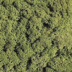 Islandmoos mittelgrün | Living / Green walls | StoneslikeStones