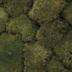 Bollmoos dunkelgrün | Living / Green walls | StoneslikeStones